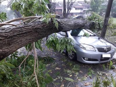 树倒车毁。