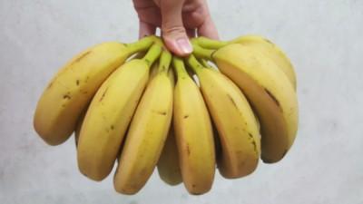 槟城香蕉藏针消息是真是假,业者促请有关当局展开调查消息来源,也促请民众勿轻信这消息。