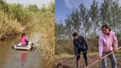 无为岛藏身在芦苇丛后(左),诸志松夫妇平时则忙于农务。
