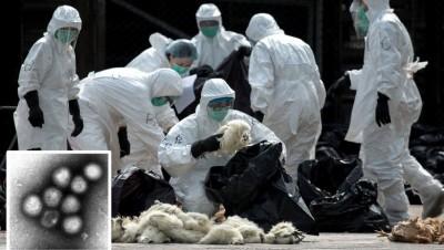 H7N9列病毒(略图)受5年前首度在中原落认可,都已于为中国为主地区传出超过1500人口感染。
