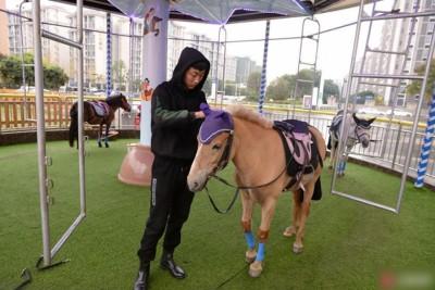 """马每天""""干活""""粗粗4只多小时,每次旋转约4分钟,约走10多圈。"""
