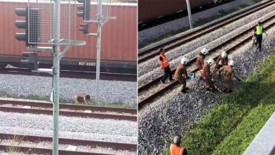 (左)男子企图穿越火车轨道反遭电击。(右)消拯员将男子从火车轨道救出。