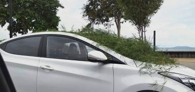 不明人士恶搞把杂草放在轿车的车镜。