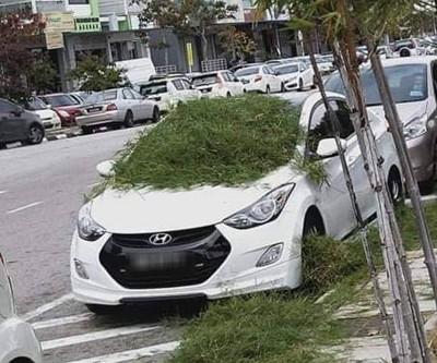 车主违例泊车在明令禁止停车的对白线上。