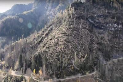 强风摧毁约1400万株树木。(网路图片)