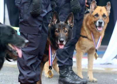 警犬获颁奖章,以示感谢它们对警队的贡献。