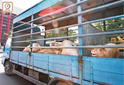 香港食卫局与业界商讨改良运猪车设计,可减少猪只排泄物或染污物质流落地面。