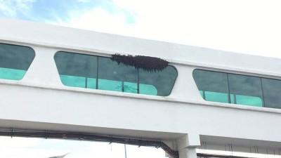 图片显示吉隆坡第二国际机场外出现蜂群。