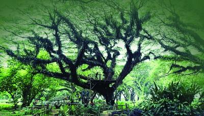 魔法森林,里面似乎住着树精灵。