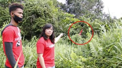 黄渼沄(右)怀疑希盟竞选旗帜被恶意拆除后乱丢在草丛。