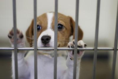 新年期间不可带狗只出入霹州太平和拉登马律区,以防疯狗症蔓延。