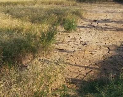 玻州稻田地在炎热及干燥天气下,泥土裂开。
