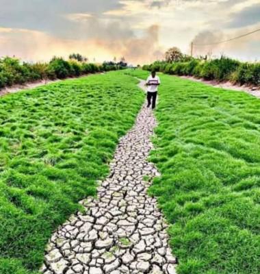 江中干涸,边长满绿油油的地毯草魅力四射。