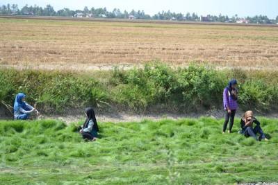原先竖立的地毯草遭摩托车骑士直驶入后,沿倒下去,为狼籍一片形容最适合。
