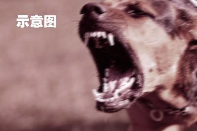 截至2月,霹州未有出现人类感染狂犬症案例。